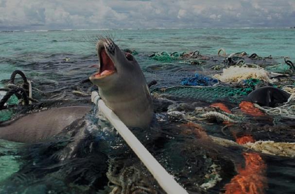 污染给动物的影响图画